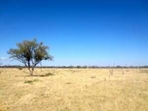 Scenery - CIEE Botswana