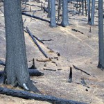 Life underground persists after severe forest fires