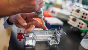A lab technician separates and analyzes DNA fragments isolated from a bacterium in an experiment to find natural-product biosynthetic genes. (Photo: Jan Sonnenmair)