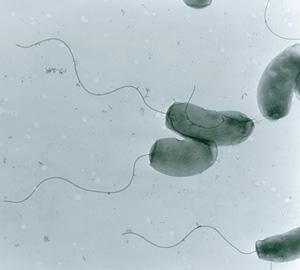 cholera_cells_300
