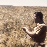 Wilson Foote in wheat field, circa 1976. (Photo: Dave King, Extension and Experiment Station Communications)