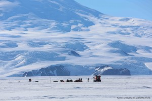 The Weddell seal research team, known as B470, surveys a seal at the base of Mt. Erebus, the world's southernmost active volcano. (Photo: Henry Kaiser)