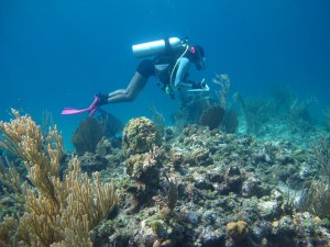 Alexandra Davis, a Ph.D. student in the Mark Hixon Lab, conducts a fish survey off Cape Eleuthera in the Bahamas in 2013. (Photo: Lillian Tuttle)