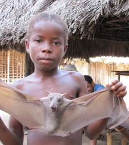 A little girl in a Liberian village holds a fruit bat she killed with a slingshot for her family's dinner. (Photo: J. Boone Kaufmann)