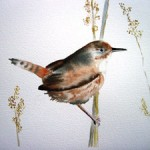 Bird in nest (Watercolor by Dominique Bachelet)
