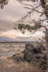 """A western juniper tree (right foreground) overlooks a sagebrush rangeland that transitions to juniper woodland in the distance. """"Many of the juniper in the photo are less than about 140 years old,"""" says Dustin Johnson of OSU Extension in Burns. """"The historical landscape would have looked much different, with fewer trees and a far greater expanse of sagebrush on the landscape."""" (Photo: Stephen Ward)"""