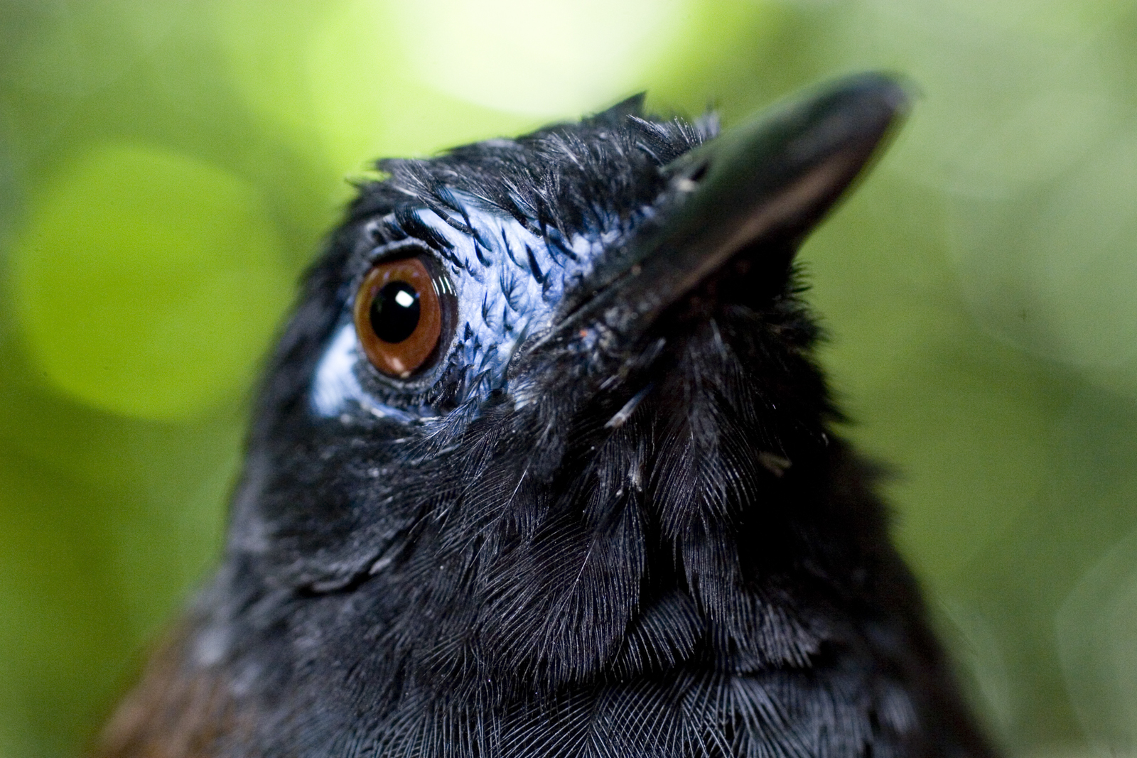 The Mystery of the Disappearing Birds | Terra Research | Oregon State  University