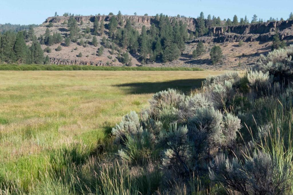 Mountain-Ranch-morning-NO-WM_CAT2441-small