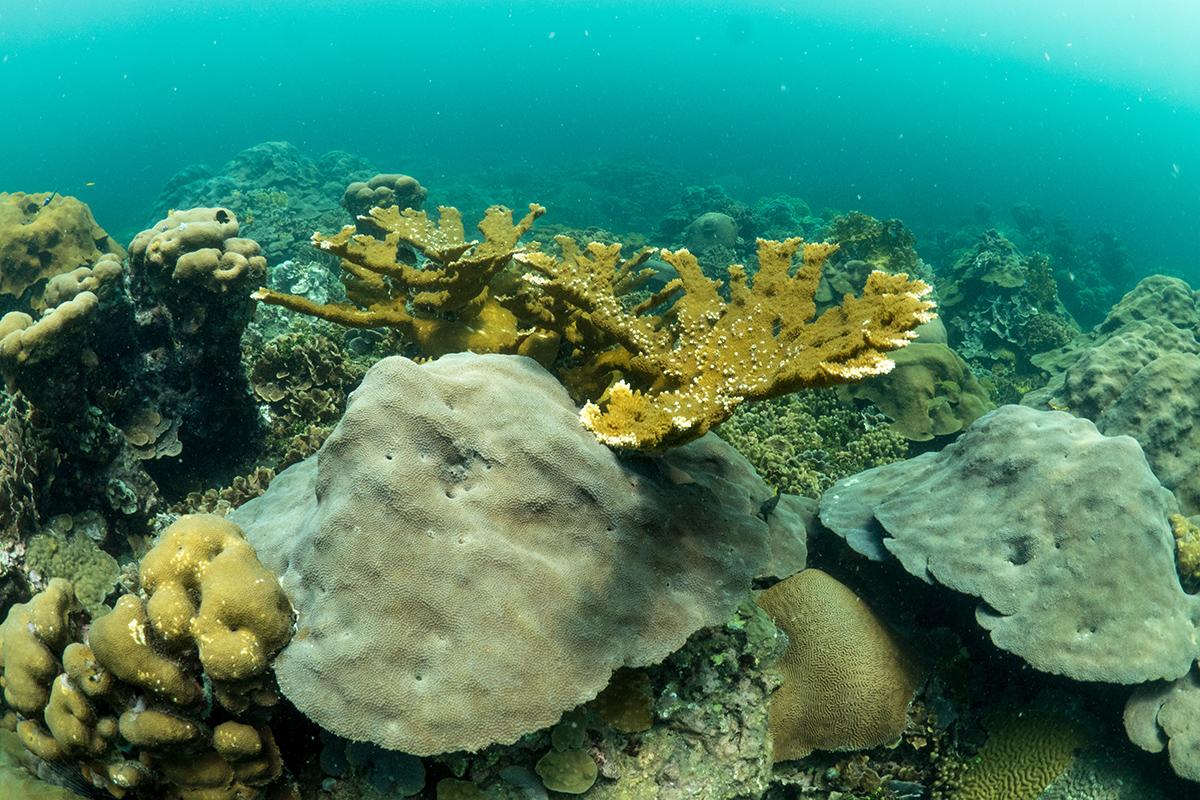 Corals on Varadero