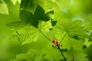 green-leaf-large