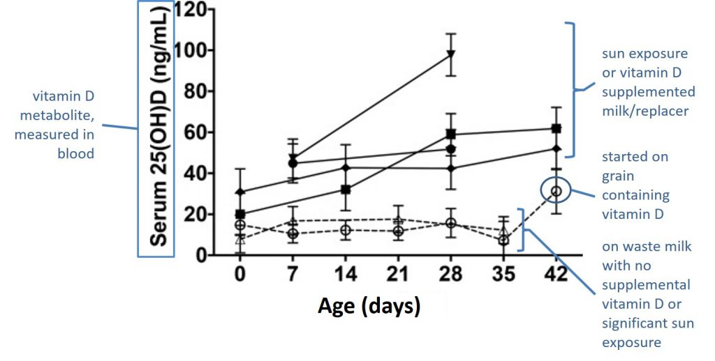 line graph showing blood vitamin D levels of six groups of calves across six weeks