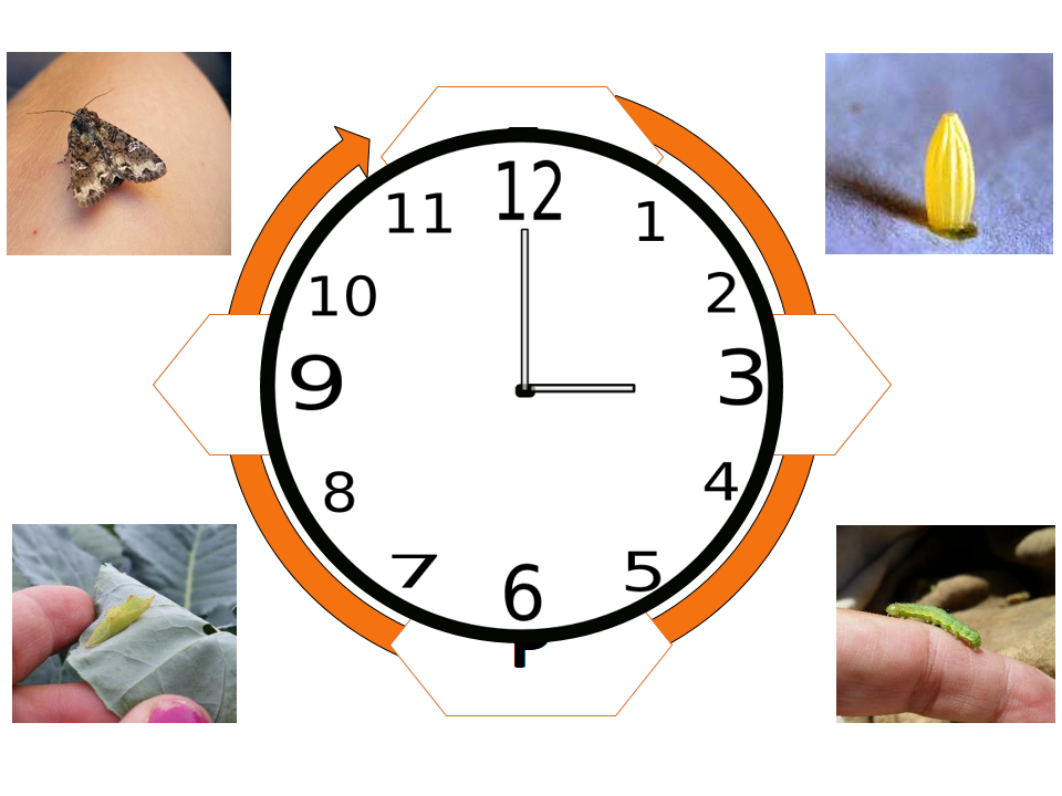 clocks_2