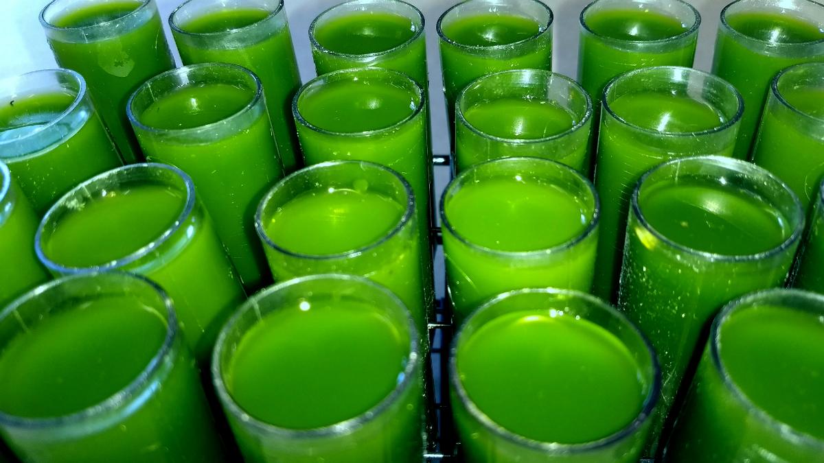 Algae experiments @STL