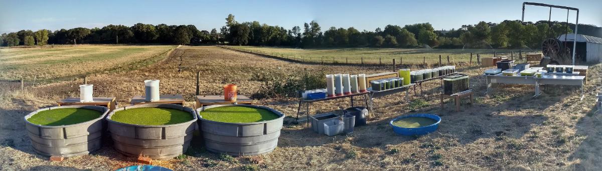 Outdoor algal growth studies @STL