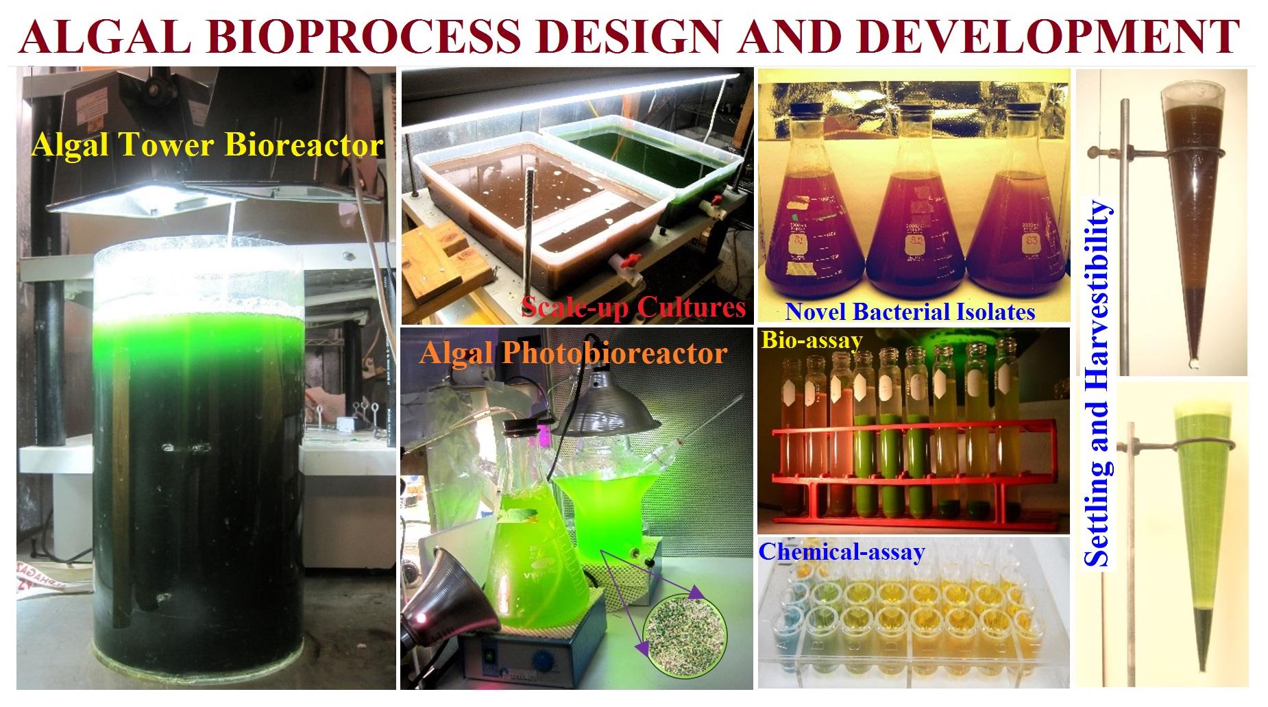 Algal Research @ STL