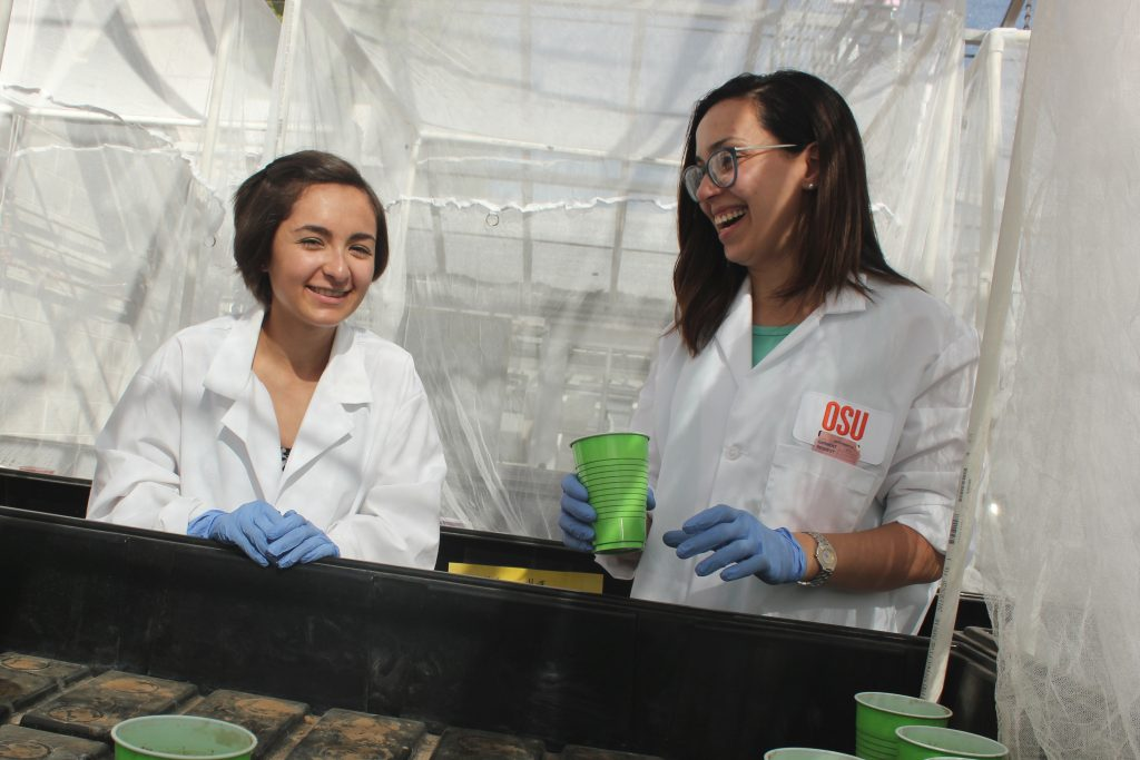 Tala Navab-Daneshmand, right, works with undergraduate student Gabi Garza in the greenhouse.