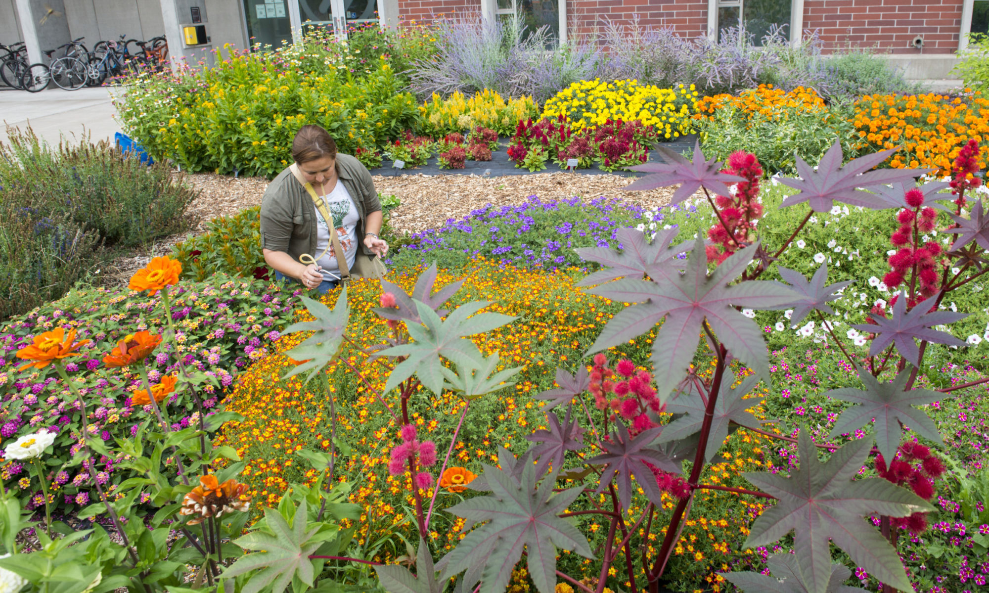 OSU Extension Master Gardener Program News