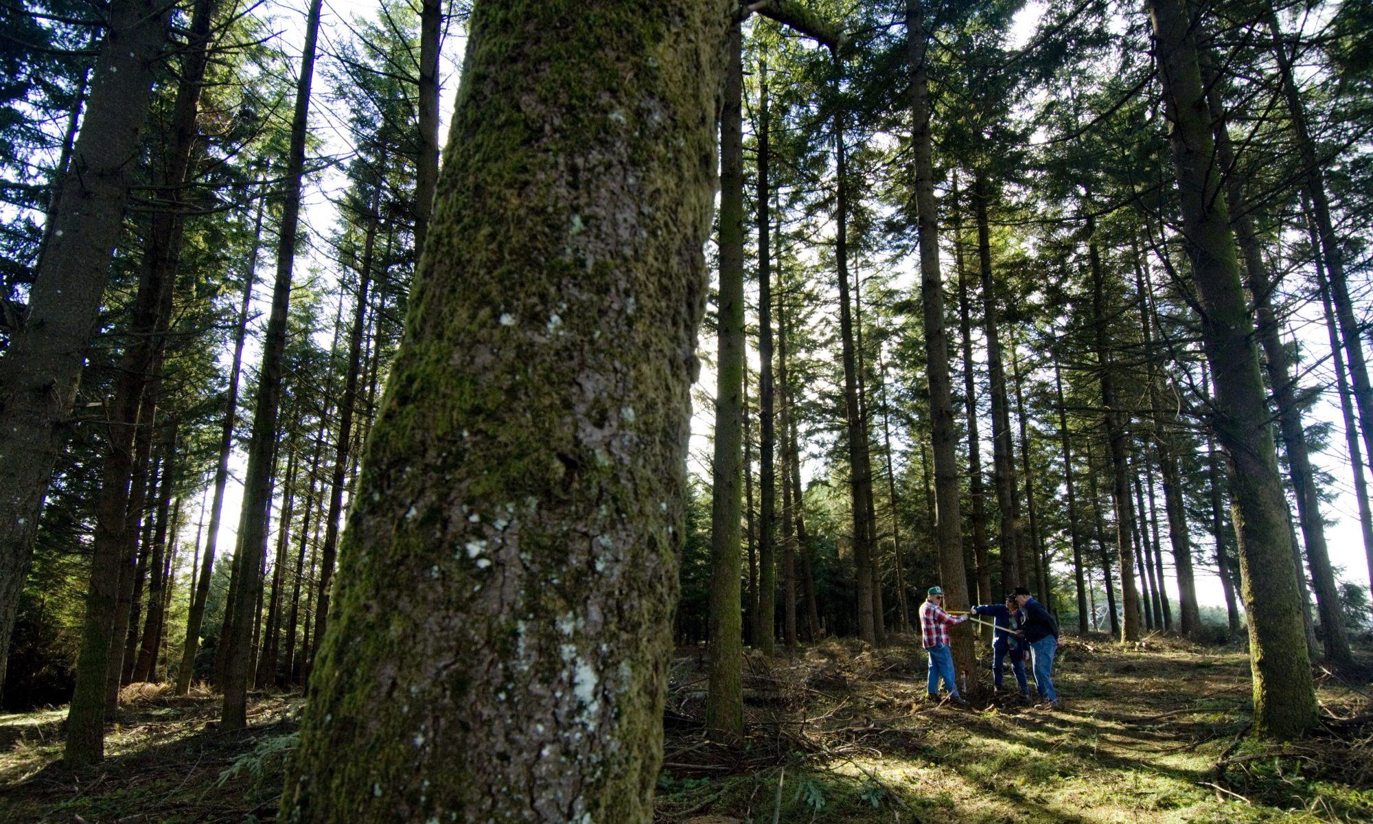 Oregon Forest Management Planning