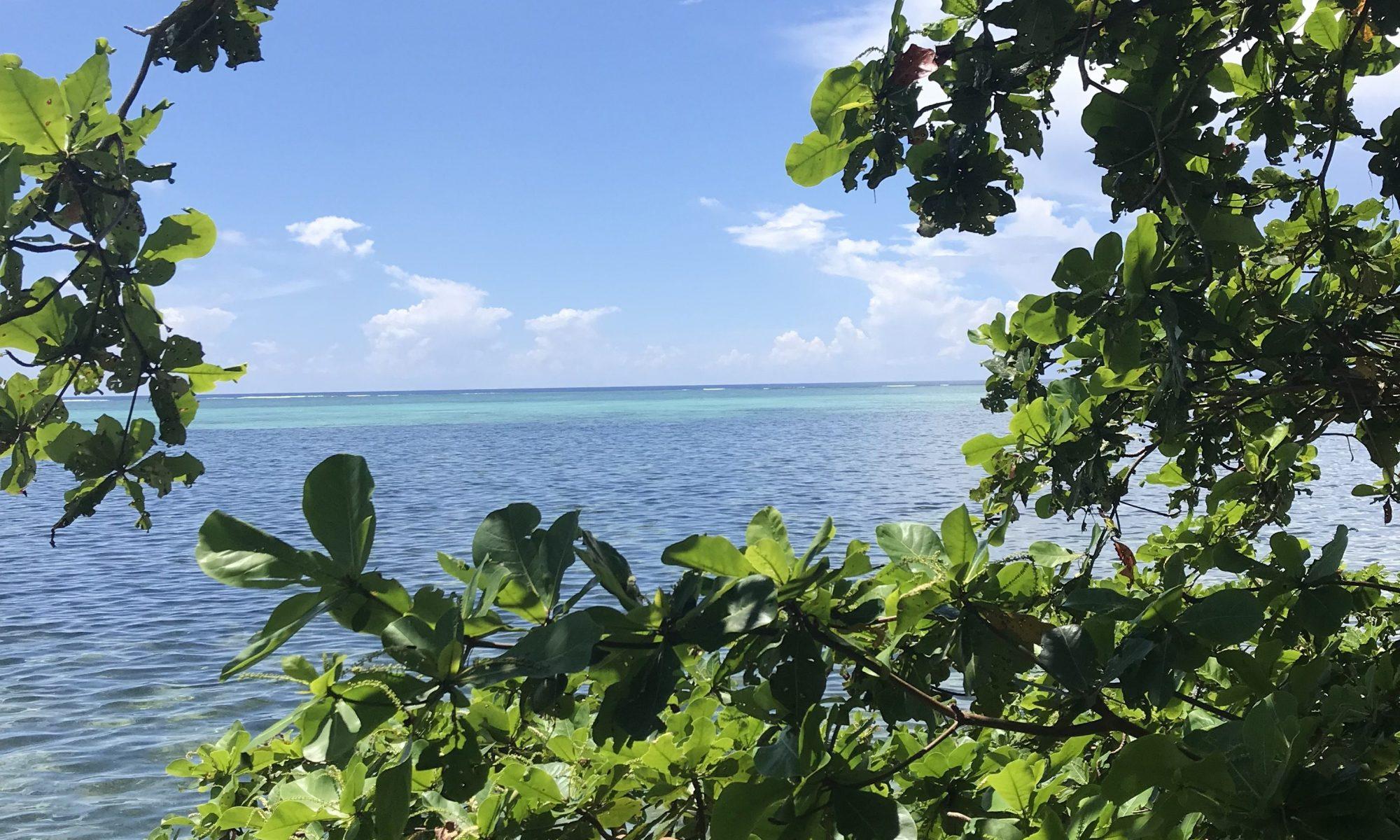 Palau 2019: Ridge to Reef