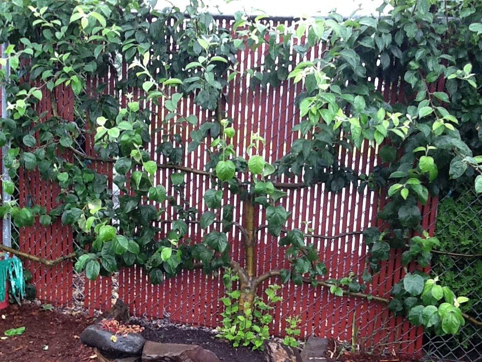 LearningGardenEspalier