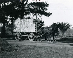 Wagon hauling fruit boxes