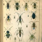 Entomology rare book example