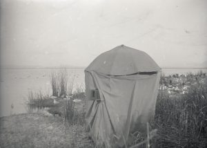 The umbrella blind setup with camera in the tules. Klamath, 1908.  OHS Research Library, Org. Lot 369, Finley A1918.
