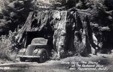 tree-car