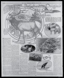 Feature in the April 26, 1914 edition of the Sunday Oregonian about Finley's efforts to restore wildlife populations around the state. Full text available at: http://oregonnews.uoregon.edu/lccn/ sn83045782/1914-04-26/ed-1/seq-80/