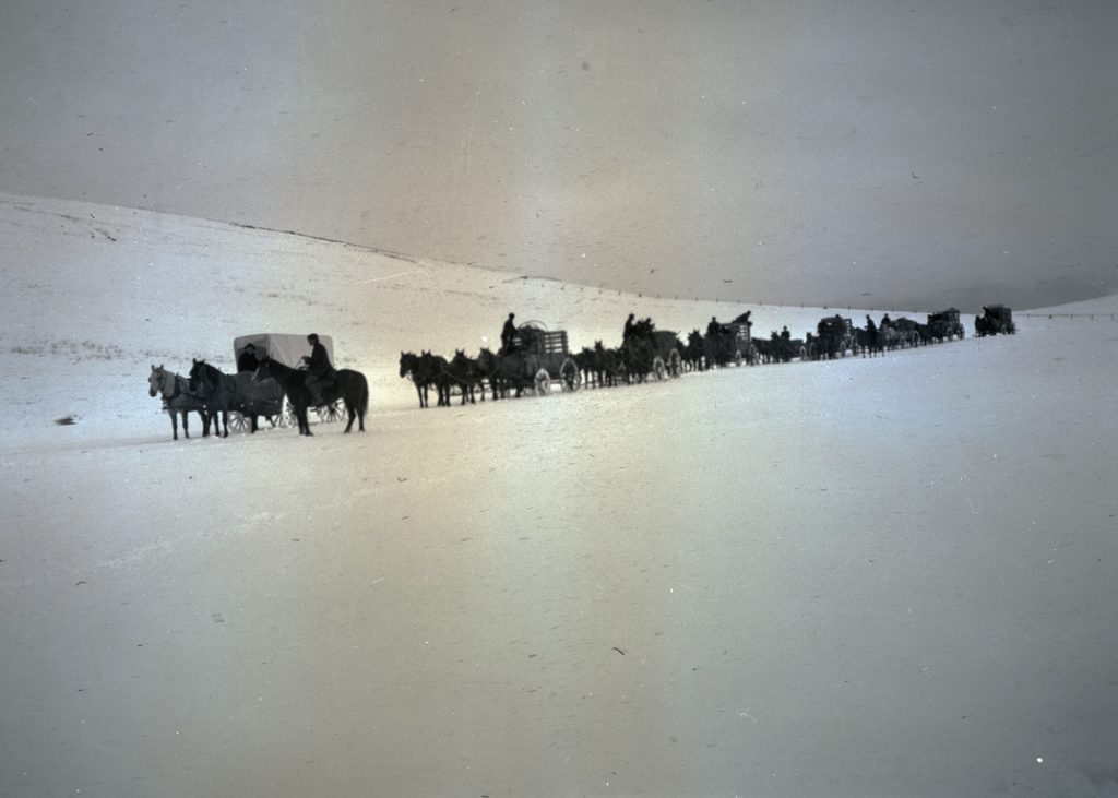 A train of wagons hauling elk crates through heavy snow up to Billy Meadows in the Wallowa Mountains, 1912. OHS Research Library, Org. Lot 369, Finley B0457.