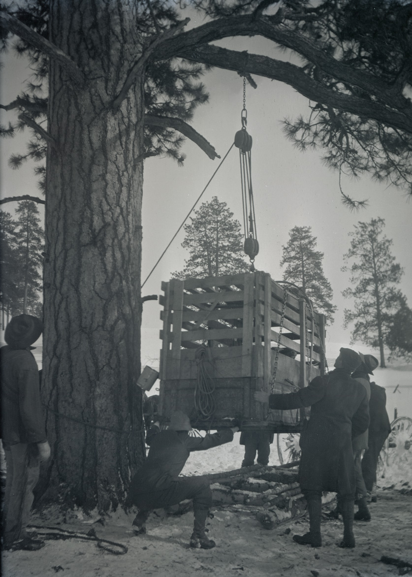 A group of men lowering an elk crate onto skids after the snow became too deep to traverse by wagon.  OHS Research Library, Org. Lot 369, Finley B0486.