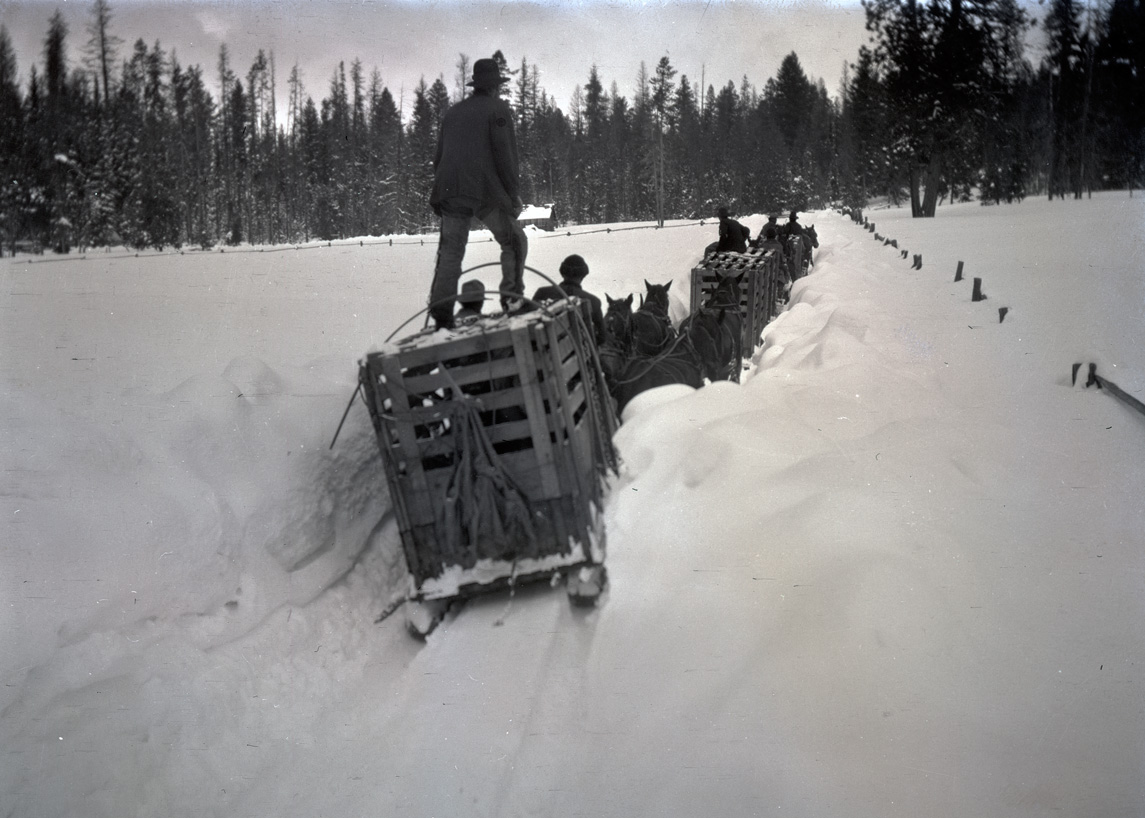 "A man balancing atop a ""go-devil"" makeshift sled hauling elk crates through the heavy snow. Wallowa Mountains, Oregon, 1912. OHS Research Library, Org. Lot 369, Finley B0489."