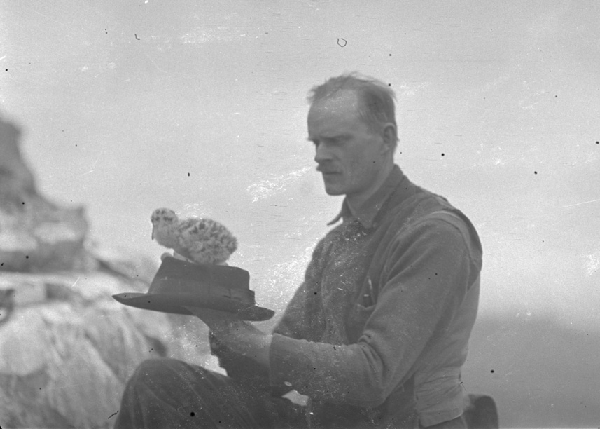 Herman Bohlman kneeling with his hat in his hand. A downy bird chick is perched atop the hat on Three Arch Rocks near Oceanside, Oregon, 1912. OHS Research Library, Org. Lot 369, Finley B0827.