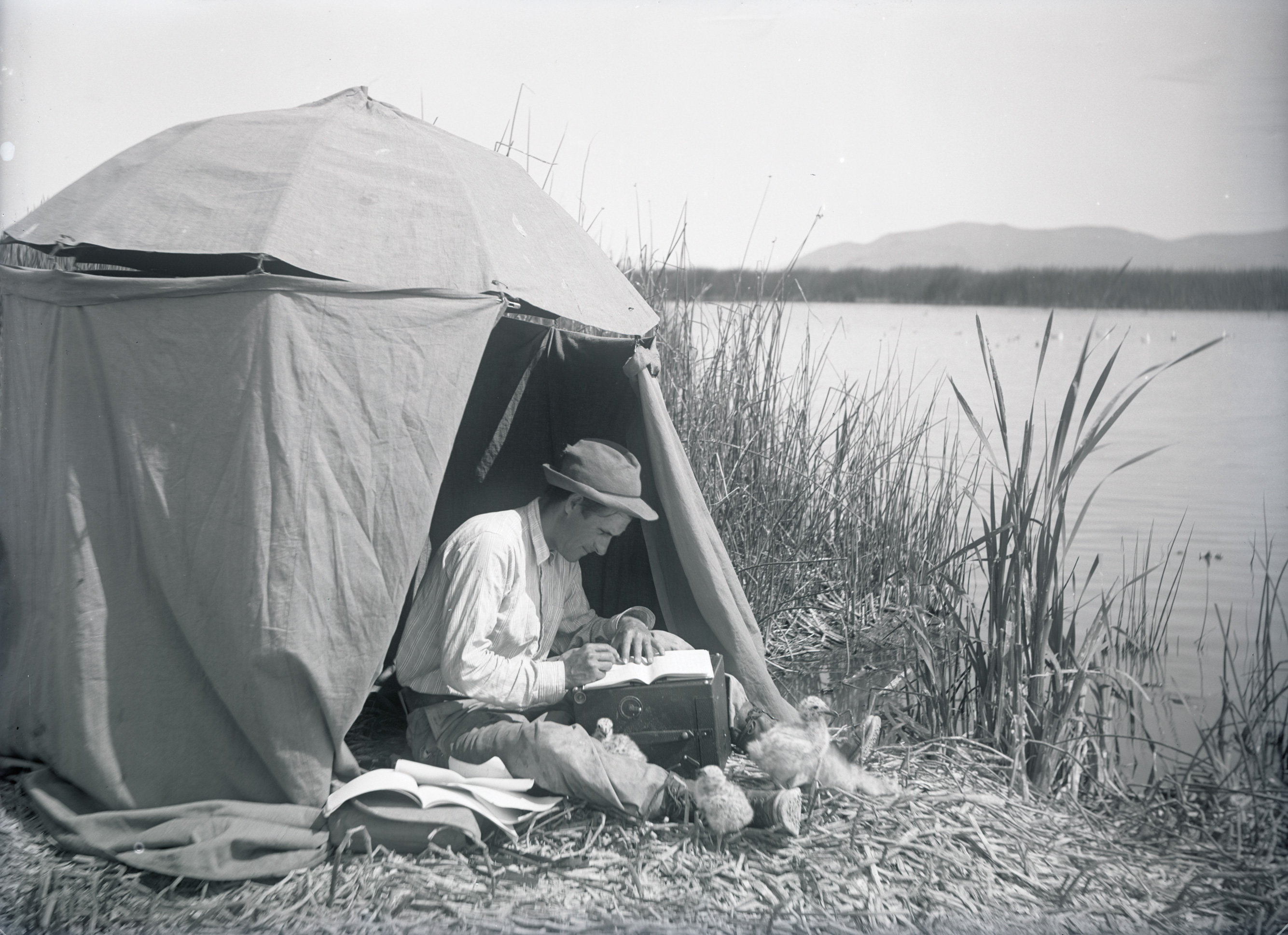 William L. Finley seated in front of an umbrella blind taking notes on the 1905 Klamath expedition with several small birds perched around his legs. Org. Lot 369, Finley A1600.