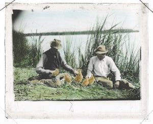 Hand-colored, unmounted lantern slide of Herman T. Bohlman and William L. Finley sitting among the tules with five young gull chicks. (Herman T. Bohlman Photograph Collection, ca. 1898-1925 (P 202))