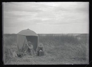 William L. Finley and Herman Bohlman with the umbrella blind in the tules, 1908 (William L. Finley Photographs Collection, circa 1900-1940 (Org. Lot 369, OHS))