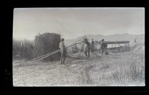 Dallas Lore Sharp holding poles and three unidentified men constructing a nature blind out of tules. The boat and a camera tripod are visible in the background.  Constructing a nature blind, William L. Finley Photographs Collection, circa 1900-1940 (Org. Lot 369, OHS)