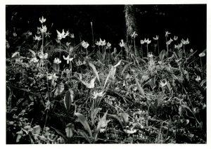wildflowers2001