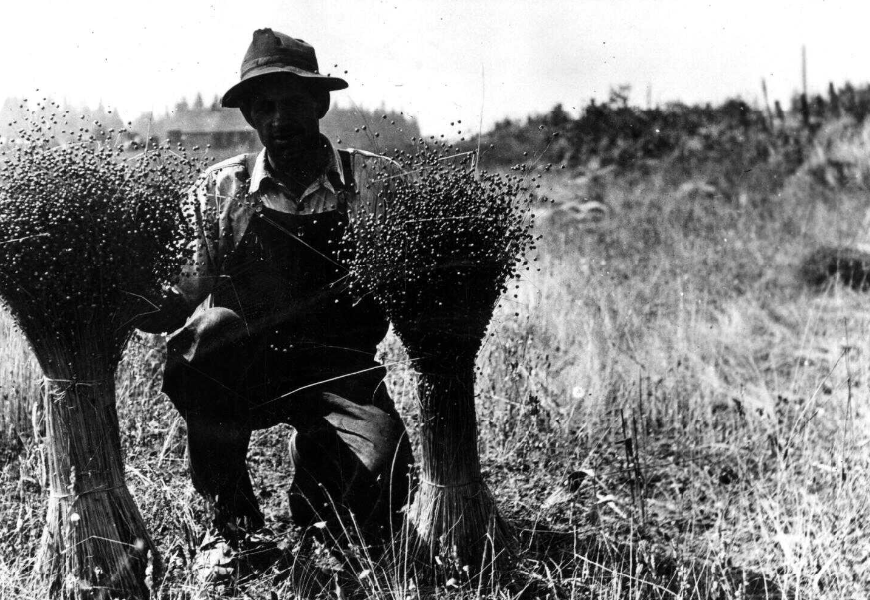 man showing flax 1926