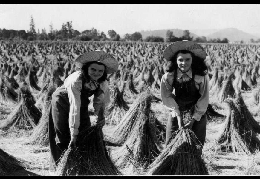 women wigwaming flax