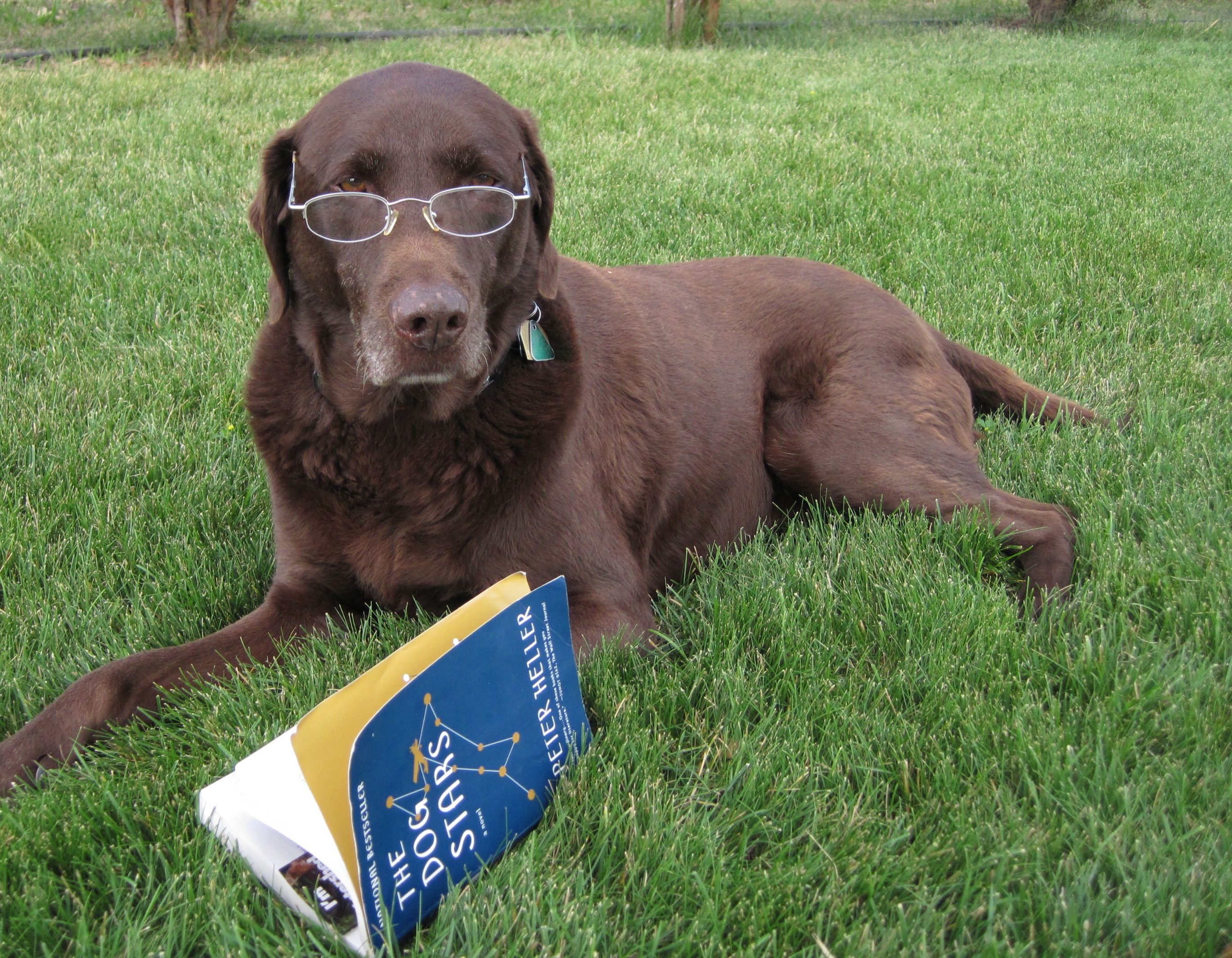 Dog days Summer-Reading