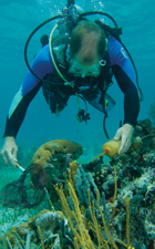 Marc Hixon Dive