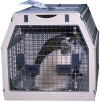 feral cats in carrier