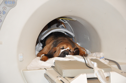 Mri Donated To The College Proves To Be Invaluable Vet