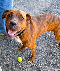 Humphrey the dog