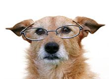 old-dog1