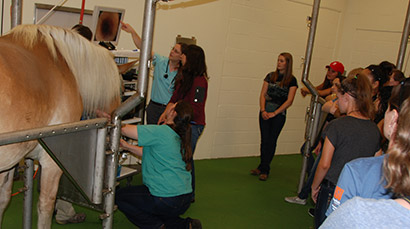 Dr. Trina Westerman demonstrates the use of an endoscope to examine an equine espophagus.