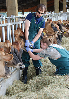 Student's Summer Research Leads to Bovine Dental Discoveries