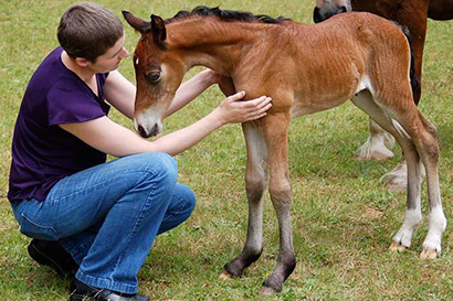 Allana McPartlin met her Welch Cob filly, Emi, while she was fighting cancer.