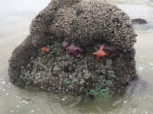 Starfish at Neptune during low tide